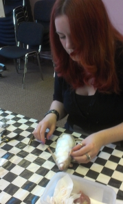 Amanda putting cotton wool into a rat