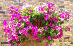 Hanging basket at Opera Holland Park